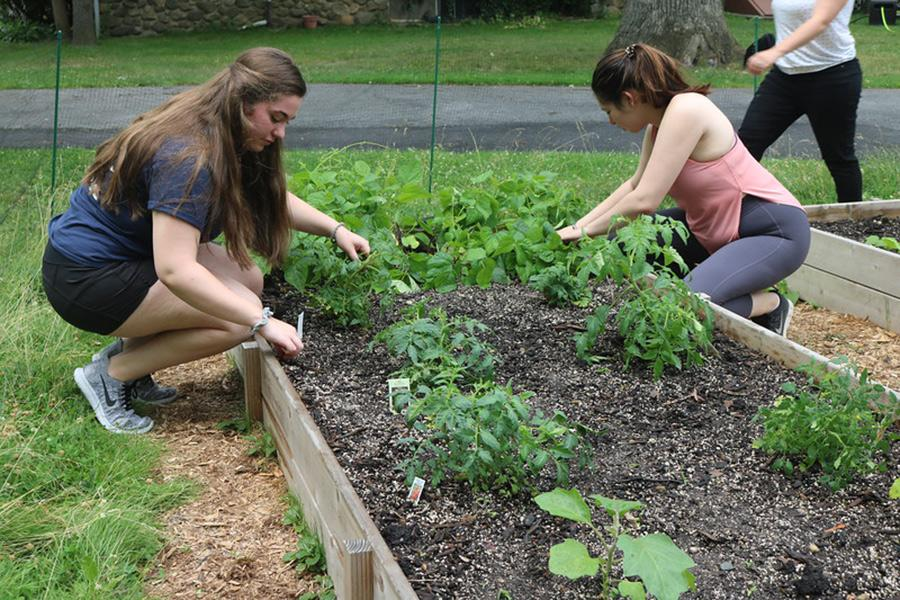 Members of the IC Green club work in the garden.